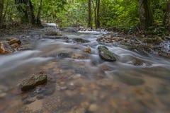 jugle的新鲜和冷的河 库存图片