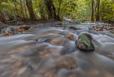 jugle的新鲜和冷的河 库存照片