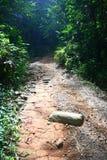 jugnle tropikalny las deszczowy wędrówka Obraz Royalty Free