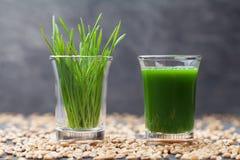 Jugo de la hierba del trigo Bebida sana y orgánica de la mañana Tendencia del Detox, de la aptitud y del superfood Imagen de archivo libre de regalías