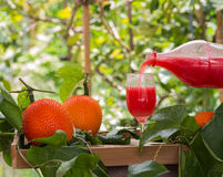 Jugo fresco de la fruta del enchufe del bebé para la buena salud Imagen de archivo