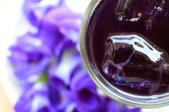 Jugo fresco del guisante de mariposa Foto de archivo libre de regalías