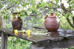Jugs on a background blossoming pear tree Stock Photography