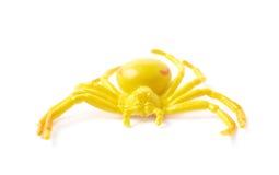 Juguete de goma falso de la araña aislado Fotos de archivo