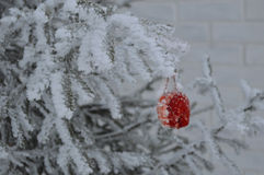 Juguete de la Navidad en un árbol de navidad Foto de archivo libre de regalías