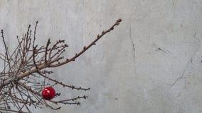 Juguete de la Navidad en una rama de árbol seca de abeto Imagenes de archivo