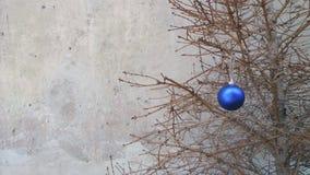 Juguete de la Navidad en una rama de árbol seca de abeto Imágenes de archivo libres de regalías