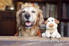 Juguete del perro y del perro del amigo fotografía de archivo