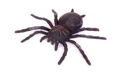Juguete negro de la araña Imagen de archivo
