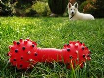 Juguete rojo con el perro Imagen de archivo libre de regalías