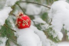 Juguete rojo del ` s del Año Nuevo en un abeto de la nieve Imagen de archivo