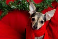 Juguete Terrier del perro de la Navidad fotos de archivo libres de regalías