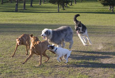 Jugueteo del perro imagen de archivo