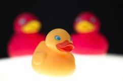 Juguetes de goma del pato Fotografía de archivo libre de regalías