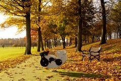 Juguetes oscilantes en el patio del parque Imagen de archivo libre de regalías