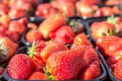 Juicey成熟新鲜的草莓 免版税库存图片