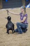 Juicio justo de la competencia de la cabra Foto de archivo libre de regalías