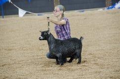 Juicio justo de la competencia de la cabra Foto de archivo