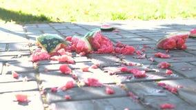 Juicy καταπληκτικό καρπούζι που σπάζουν στις πλάκες επίστρωσης Κομμάτια του καρπουζιού στο έδαφος απόθεμα βίντεο