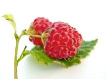 Juicy κόκκινα σμέουρα στο πράσινο φύλλο στοκ φωτογραφία