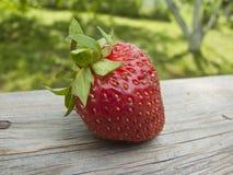 juicy φράουλα Στοκ Φωτογραφίες