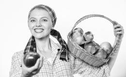 Ο ειλικρινής χωρικός γυναικών φέρνει το καλάθι με τα φυσικά φρούτα Γυναικείος κηπουρός υπερήφανος του αγροτικού ύφους κηπουρών γυ στοκ φωτογραφία με δικαίωμα ελεύθερης χρήσης