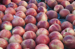 Juicy and appetizing nectarines in the market. Juicy and appetizing nectarines for sale in the market Royalty Free Stock Image