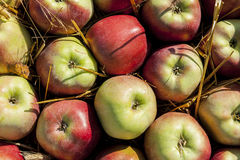 Juicy apples. Stock Images
