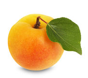 Juicy apricot isolated on the white background Stock Image