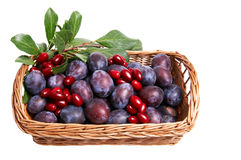 Juicy autumn fruits in the basket.. Stock Photos