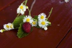 Juicy berries. Beautiful juicy berry, and chamomile. Macro photo Stock Image