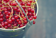 Juicy berries of red currant in an iron small bucket Stock Photography