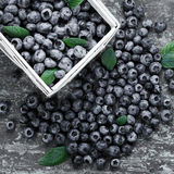 Juicy blueberries in basket Stock Photography