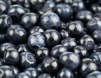 Juicy blueberry Stock Image