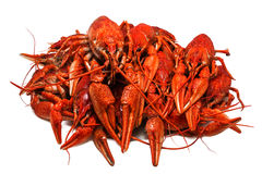 Juicy boiled crawfish closeup isolated . seafood. Stock Images