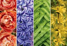 Collage picture of different flowers and plants. Juicy, bright colors of nature, plants, collected in a collage for use in banners, backgrounds, screensavers stock images