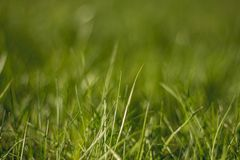 Juicy and bright green grass.Close up. Green grass background. The texture of the grass stock images