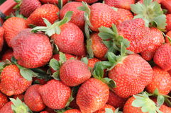 Juicy bright red strawberries Royalty Free Stock Photos