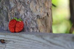 Strawberry twins Stock Photo