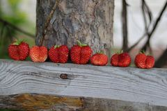 Strawberry twins Royalty Free Stock Image