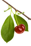 Juicy cherries with leaf isolated on white background Royalty Free Stock Photography