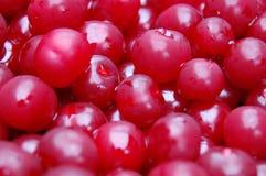 Juicy cherries. Rnharvested juicy ripe red cherries Stock Photography