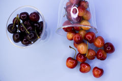 Juicy cherries in the studio stock image