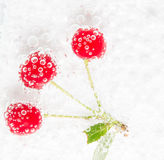 Juicy cherries in water bubbles Royalty Free Stock Image