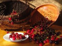 Juicy Cherry. Juicy fresh cherry still life under the lights of raising Sun Stock Image