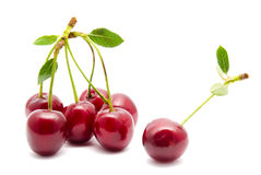Juicy cherry with leaf isolated Stock Photography