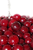 Juicy cherry in water Royalty Free Stock Images