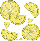 Juicy citrus fruit. Bright citrus design element. Royalty Free Stock Images