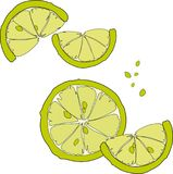 Juicy citrus fruit. Bright citrus design element. Royalty Free Stock Photos