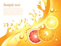 Juicy citrus splashes vector background Stock Photography